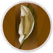 White Anthurium Flower Round Beach Towel