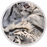 White Bengal Tigers, Forestry Farm Round Beach Towel