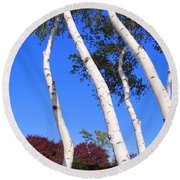 White Birch Blue Sky Round Beach Towel