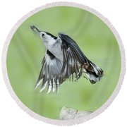 White-breasted Nuthatch Flying With Food Round Beach Towel