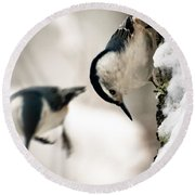 White Breasted Nuthatch In The Snow Round Beach Towel by Bob Orsillo