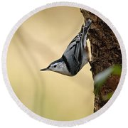 White-breasted Nuthatch Pictures 46 Round Beach Towel
