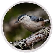 White-breasted Nuthatch Pictures 47 Round Beach Towel