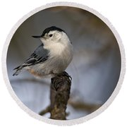 White-breasted Nuthatch Pictures 60 Round Beach Towel
