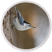 White-breasted Nuthatch Pictures 88 Round Beach Towel