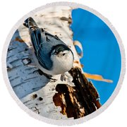 White-breasted Nuthatch Pictures 95 Round Beach Towel