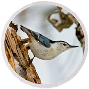 White-breasted Nuthatch Pictures 97 Round Beach Towel