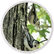 White Breasted Nuthatches Round Beach Towel