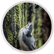 White Breasted Nuthatchs Round Beach Towel