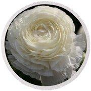 White Buttercup - Ranunculus Round Beach Towel