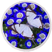 White Butterfly On Blue Cineraria Round Beach Towel