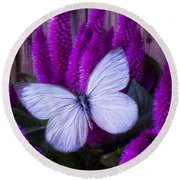 White Butterfly On Flowering Celosia Round Beach Towel