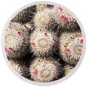 White Cactus Pink Flowers No1 Round Beach Towel