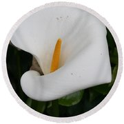 White Calla Lilly Round Beach Towel