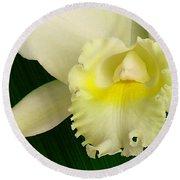 White Cattleya Orchid Round Beach Towel