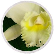 White Cattleya Orchid Round Beach Towel