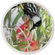 White-cheeked Honeyeater Feeding Round Beach Towel