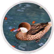 White-cheeked Pintail Round Beach Towel
