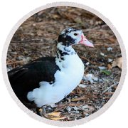 White Chested Muscovy Round Beach Towel