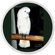 White Cockatiel-loreto Mx. Round Beach Towel