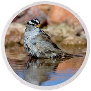 White-crowned Sparrow Bathing Round Beach Towel
