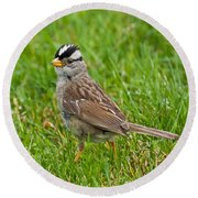 White Crowned Sparrow Round Beach Towel