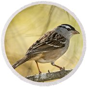 White-crowned Sparrow Pictures 63 Round Beach Towel