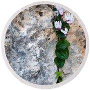 White Cyclamen Flowers Round Beach Towel
