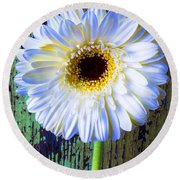 White Daisy With Green Wall Round Beach Towel