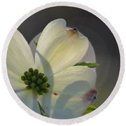 White Dogwood Blooms Series Photo K Round Beach Towel
