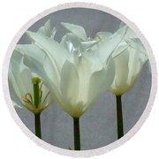 White Early Dawn Tulips Black Border Round Beach Towel