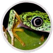 White-eyed Leaf Frog Round Beach Towel