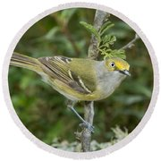 White-eyed Vireo Round Beach Towel