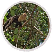 White-faced Capuchin Monkey In Manuel Antonio National Preserve-costa Rica Round Beach Towel