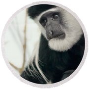 White Faced Monkey Round Beach Towel