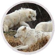 White Furs Round Beach Towel