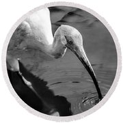 White Ibis - Bw Round Beach Towel