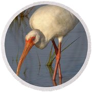 White Ibis In Grass Round Beach Towel