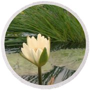 White Lily Near Pond Grass Round Beach Towel
