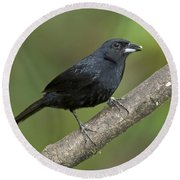 White-lined Tanager Round Beach Towel