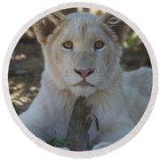 White Lion Cub  Round Beach Towel