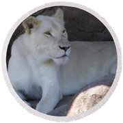 White Lion Looking Proud Round Beach Towel