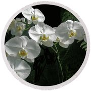 White Moth Orchid Phalaenopsis And Ferns Round Beach Towel