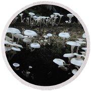 White Mushrooms Amazon Jungle Brazil 1 Round Beach Towel