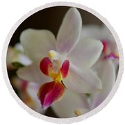 White Orchid Close Round Beach Towel