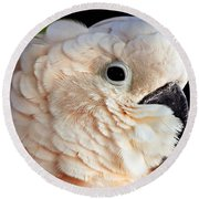 White Parrot Round Beach Towel