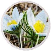 White Pasque Flower Round Beach Towel