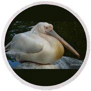 White Pelican Sitting Round Beach Towel
