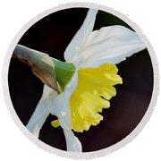 White Petaled Daffodil Round Beach Towel