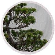 White Pine Bonsai Round Beach Towel